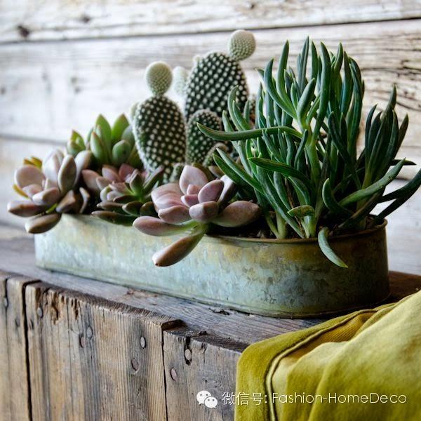 ATELIER RUE VERTE , le blog: Idées déco / Des cactus dans ...
