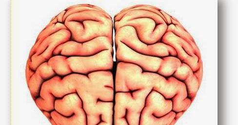 119 Posts de Inteligencia Emocional e Inteligencias Múltiples