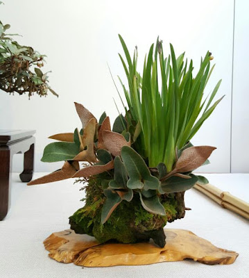 Composicion de varias plantas para ecento de un bonsai