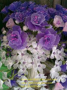 Bunga Stokin Purple