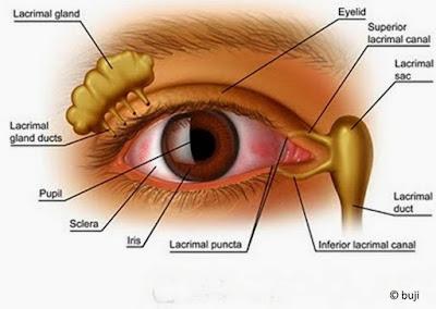 10 Tips Cara Menjaga Kesehatan Mata Agar Tidak Minus, Tips Menjaga Kesehatan Mata