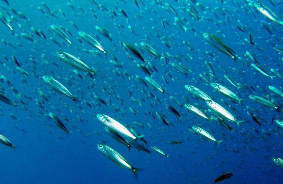 Sparksmcfly hallan ocho nuevas especies de peces en aguas for Especies de peces