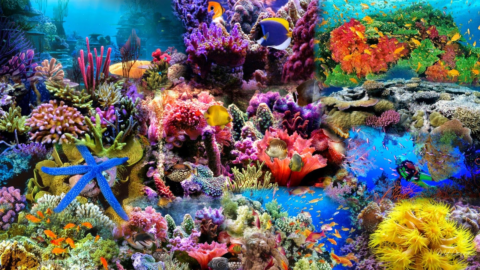 coral reef hd wallpapers earth blog