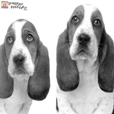Curiosidades sobre cachorros e cães