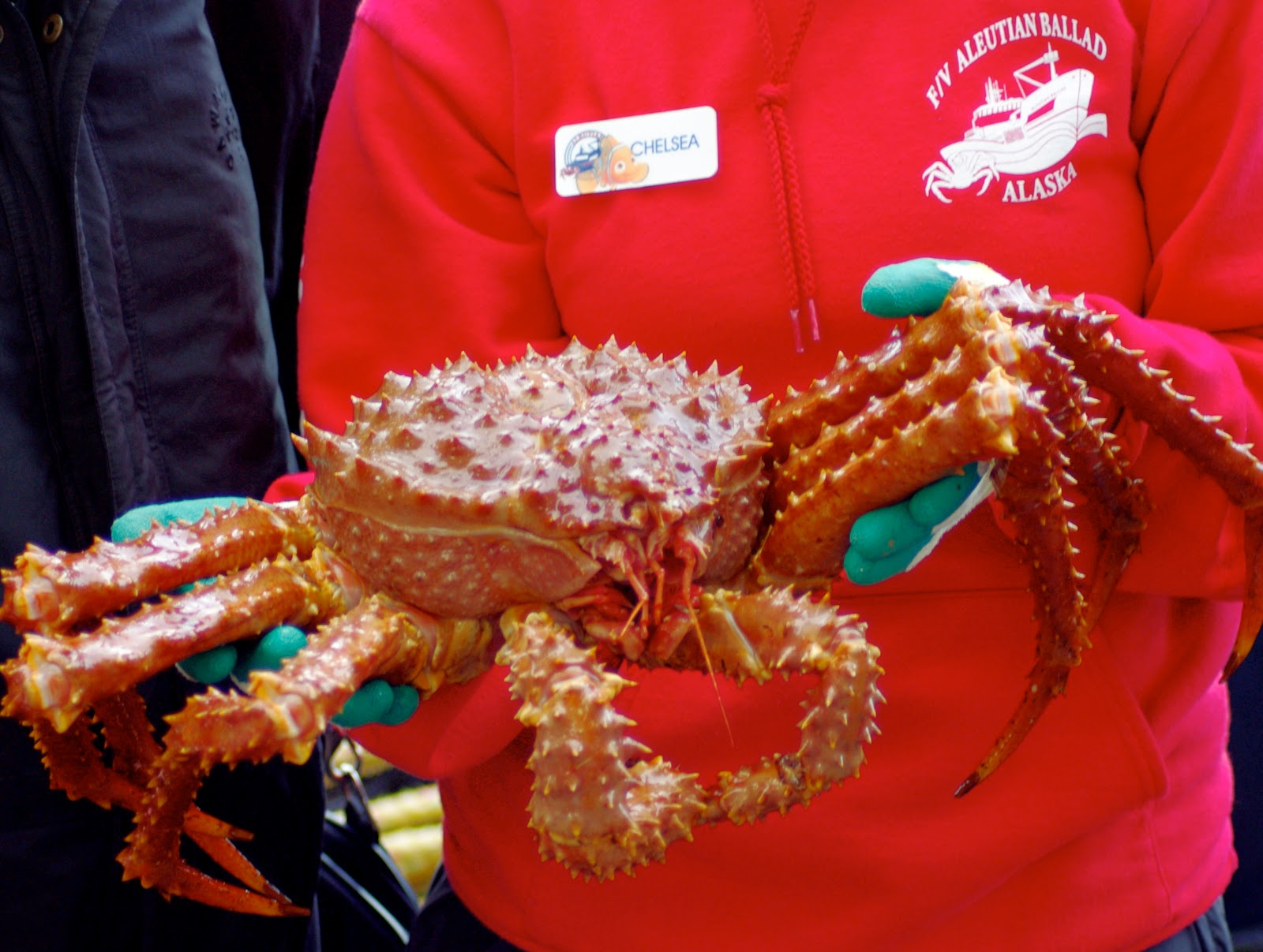 "phillips food king crab Products that are sold in grocery stores phillips food inc introducing king crab to the trade , king crab, ""synonymous with the raw, rugged beauty of alaska""."