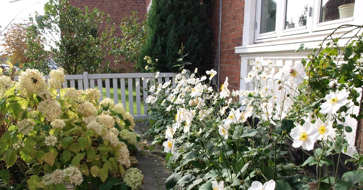 Signes byhave: 10 min om dagen: en rundtur i haven
