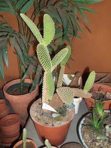 Featured Succulent