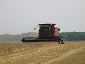 Barley Harvest