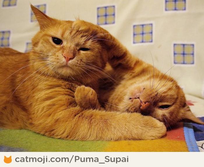 Фото: два рыжих кота из Catmoji - социальная сеть для котов