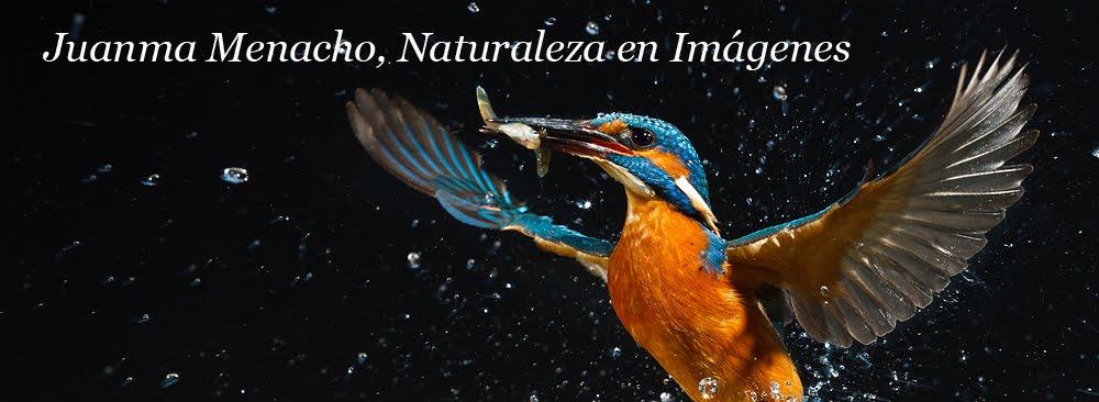 Juanma Menacho, Naturaleza en Imágenes