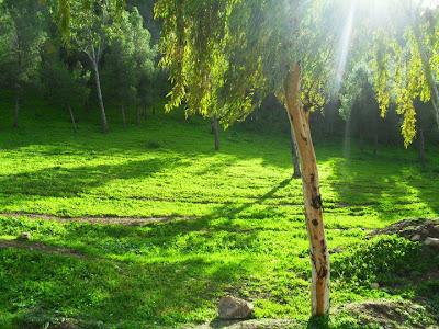 صور فصل الربيع في مدينة بلدية عمي موسى ولاية غليزان AMMI MOUSSA