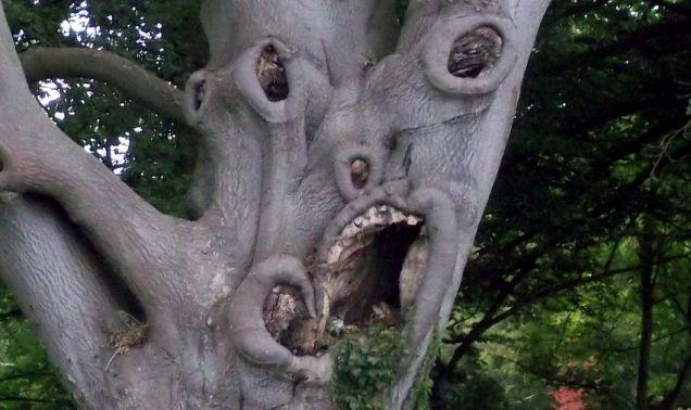 Pokok macam hantu