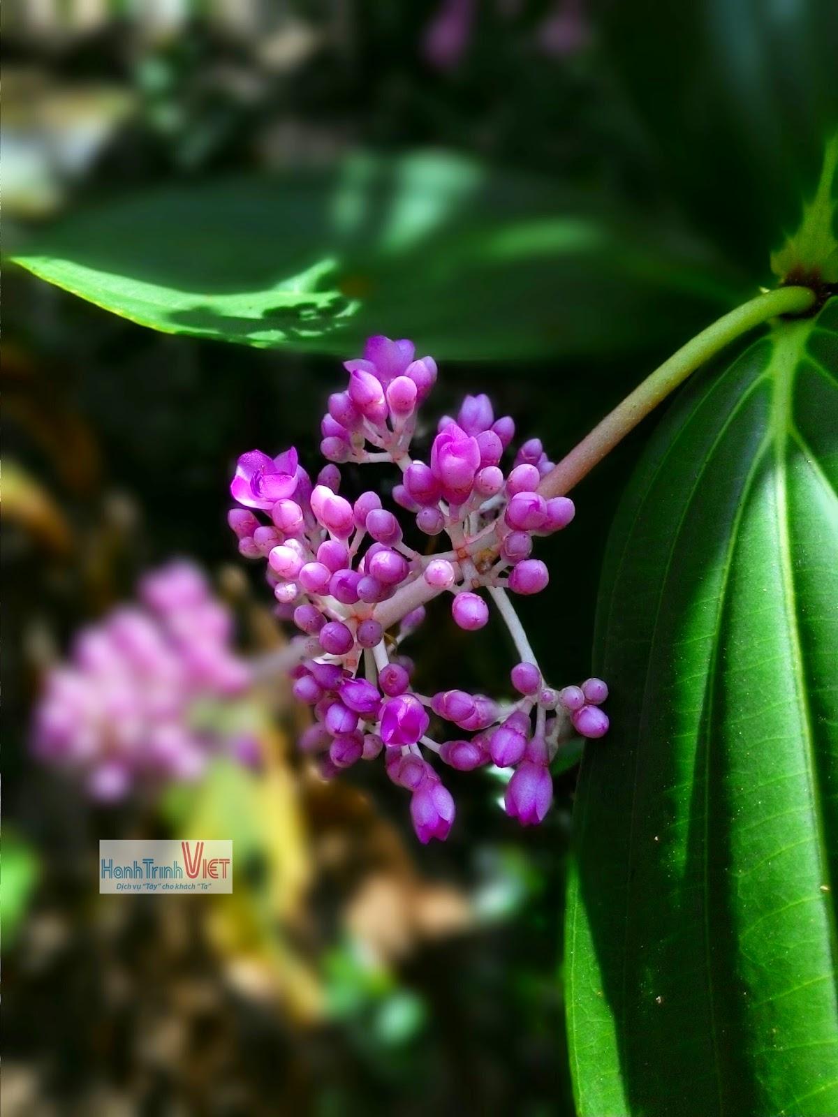 Loài hoa chưa biết tên