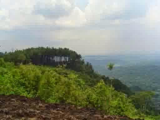 hutan-pinus-yogyakarta