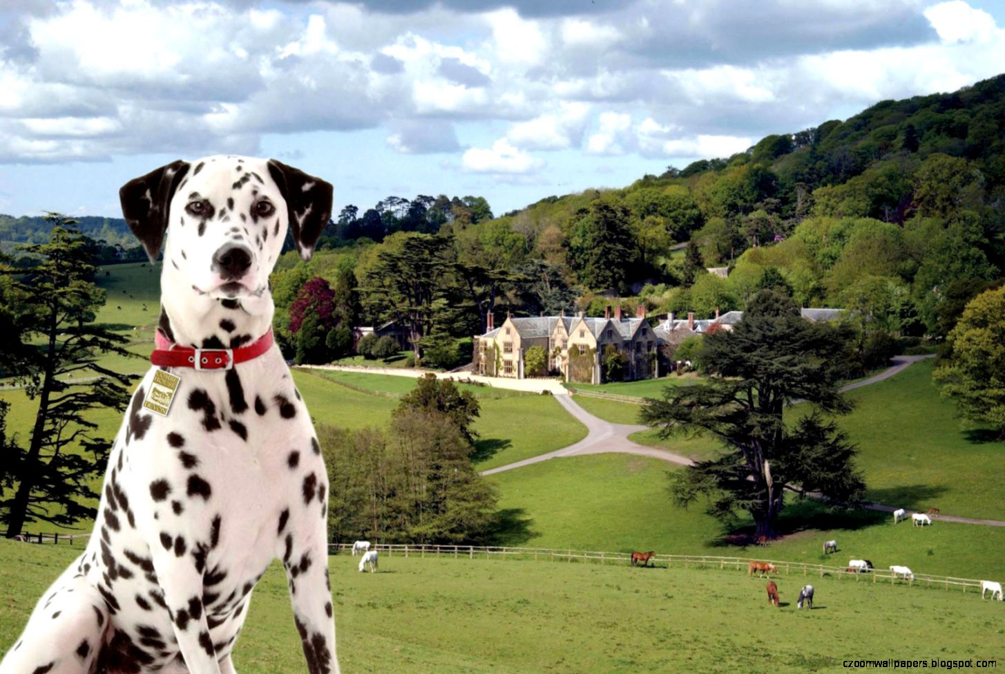 Dalmation Dog Desktop Wallpapers   New WallpapersNew Wallpapers