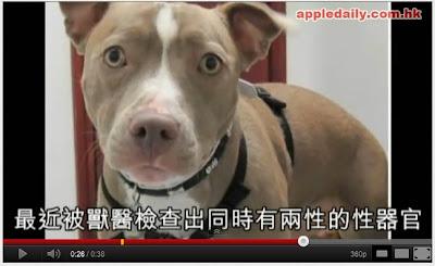 罕見陰陽犬