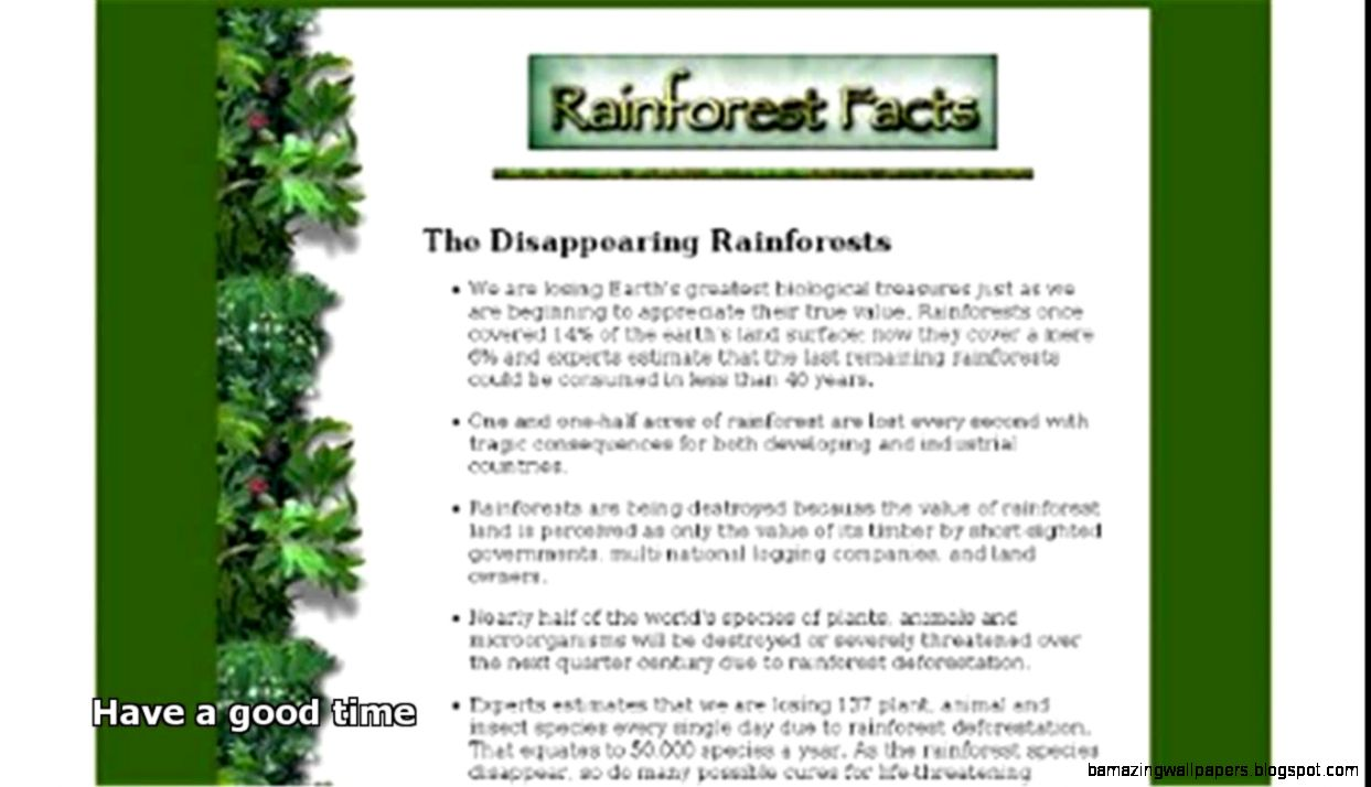rainforest animals facts   YouTube