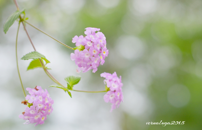 Verna Luga Floral Photography