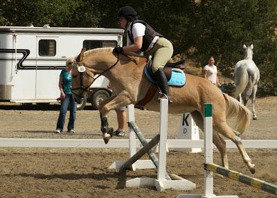 palomino show jumping mule