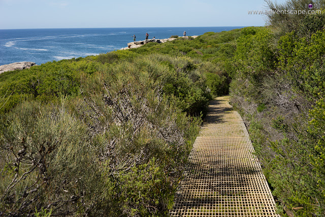 adventscape, attraction, Australia, Bundeena, coastal walk, iori, landscape, limestone, nature, New South Wales, NSW, Philip Avellana, places to visit, Royal National Park, tourism, Wedding Cake Rock, metal path, bushes