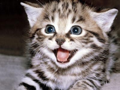 Los gatos domésticos