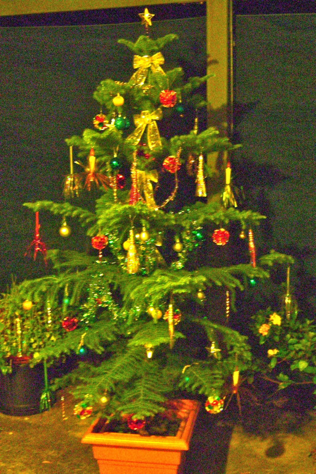 A geriatric grandmother: OUR CHRISTMAS TREE.....AT LAST