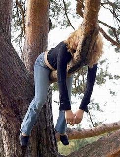 Bêbadas que dão em  árvores
