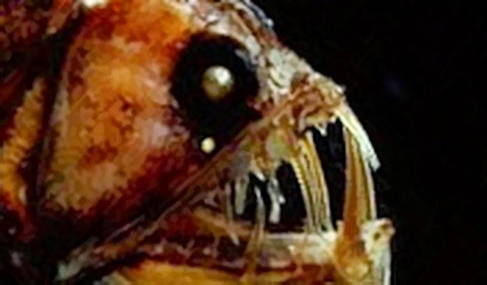 Ini 5 Makhluk Laut Paling Aneh dan Misterius di Dunia