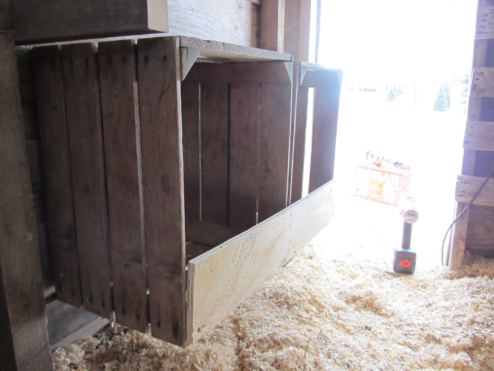 chicken in nesting box how to tell if its sick