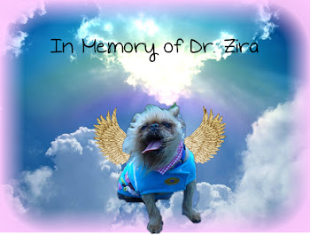 Sweet Dr. Z- December 15, 1999- March, 8 2012