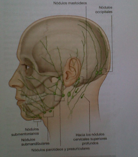 Anatomía For Dummies