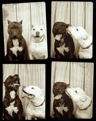 cute pitbull puppies pictures. Spring Puppies~. at 1:37 PM