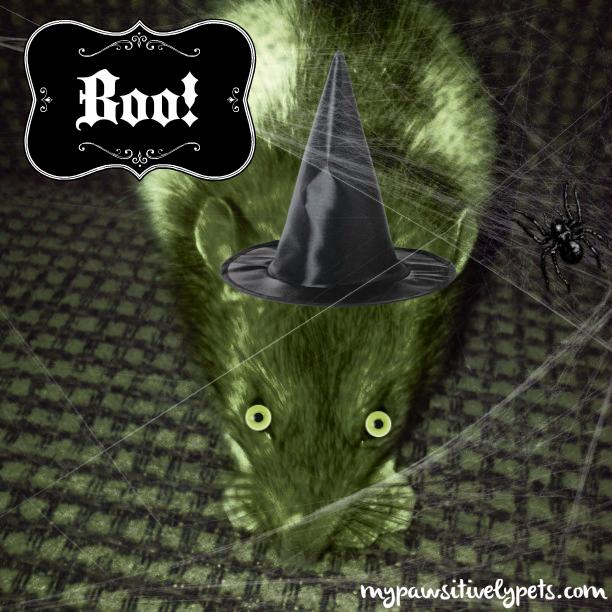 Rat witch
