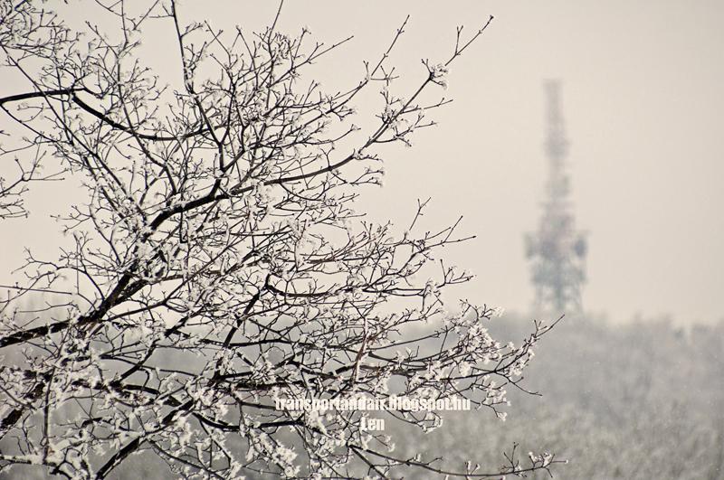Csipkét formáz a hó az ágakon, a budapesti Normafán