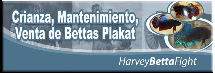 PLAKAT BETTA 809