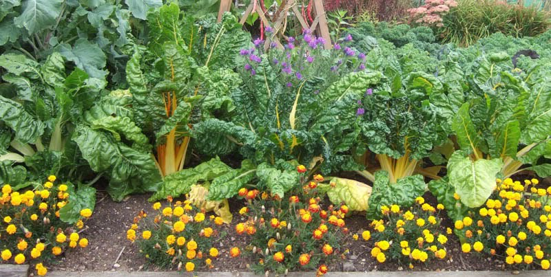 Two men and a little farm companion planting