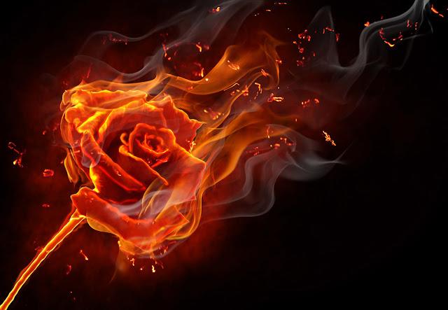 Die Liebe ist ein Feuer FreeGreatPicture.com-9952-burning-rose