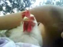Caterina gallina salvata fa le fusa mentre si prende tutte le coccole al parco :)