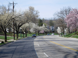 PICS FROM PAST WEEKS: Ludlow Avenue in Bloom