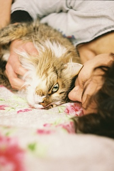 Temperament and Personality of Maine Coon Cats