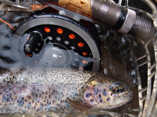Fly reel and small netted rainbow trout