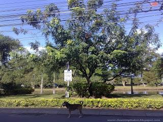 Parks in Phuket