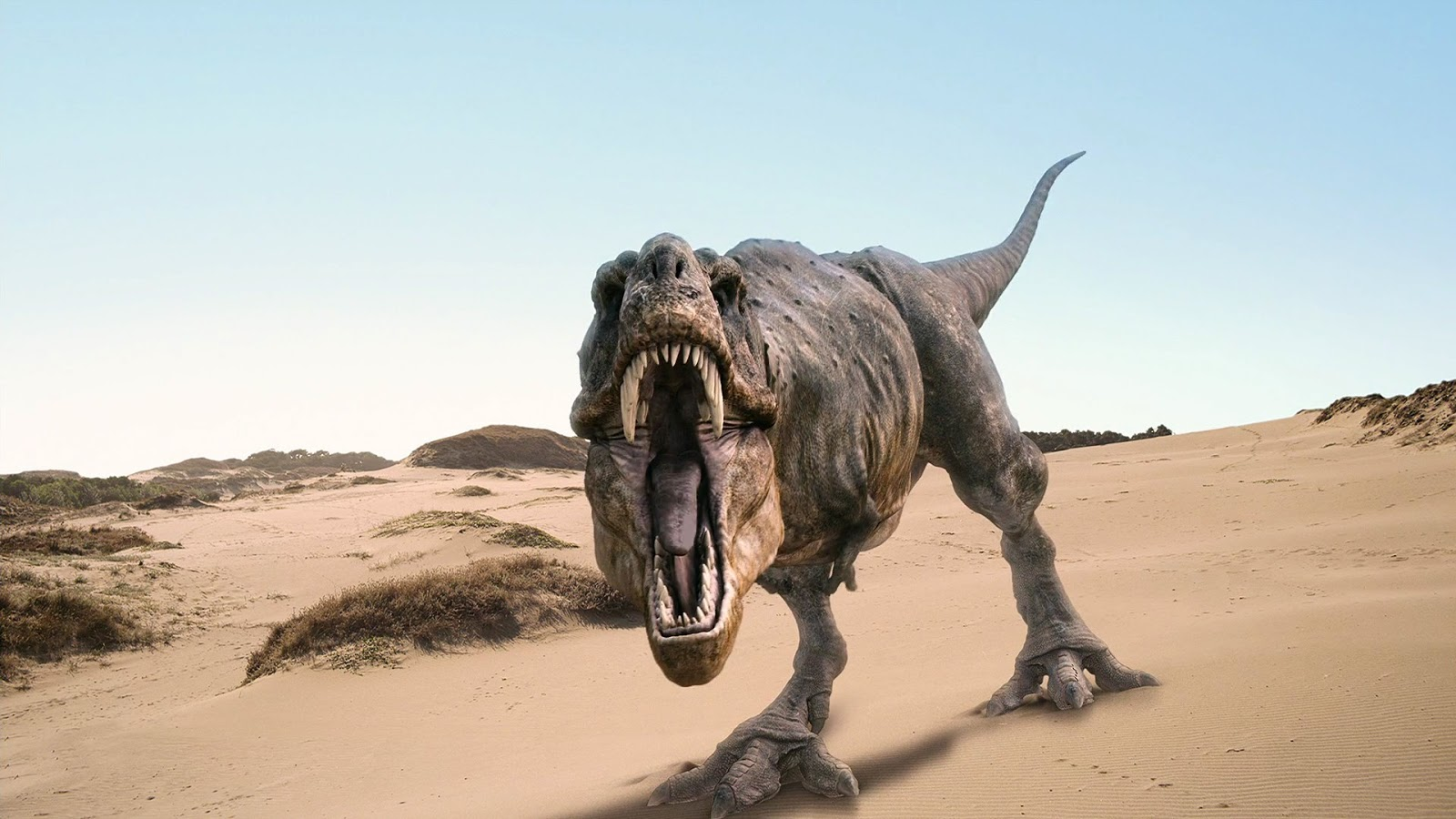 world all animals dinosaurs new wallpapers 2013