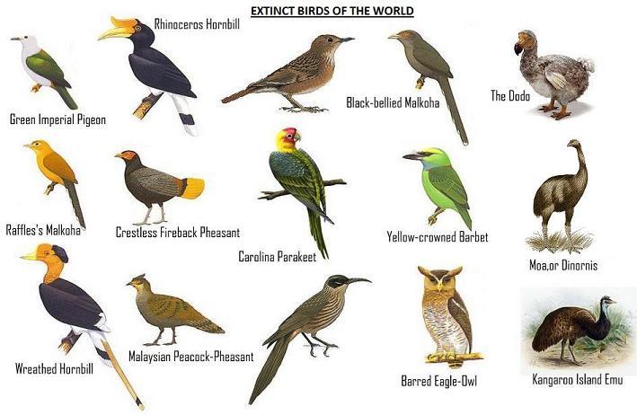 Extinct Animals In The World Extinct birds of the worldAlmost Extinct Animals In The World