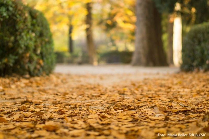 Sendero de otoño con hojas en el Real Jardín Botánico Madrid - Foto Maria Bellet