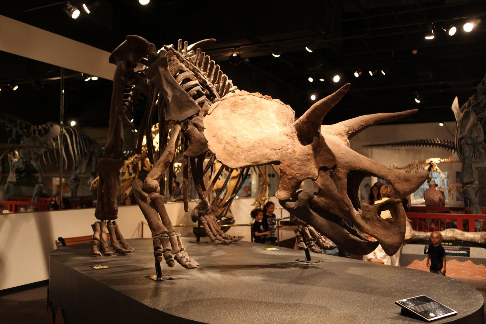 i heart mesa.: The Arizona Museum of Natural History