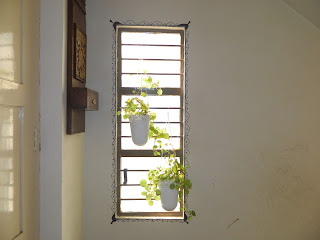 design window with plants