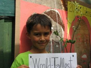 世界一「ノッポ」のタンポポと<br>近所の小学一年生が背競べ