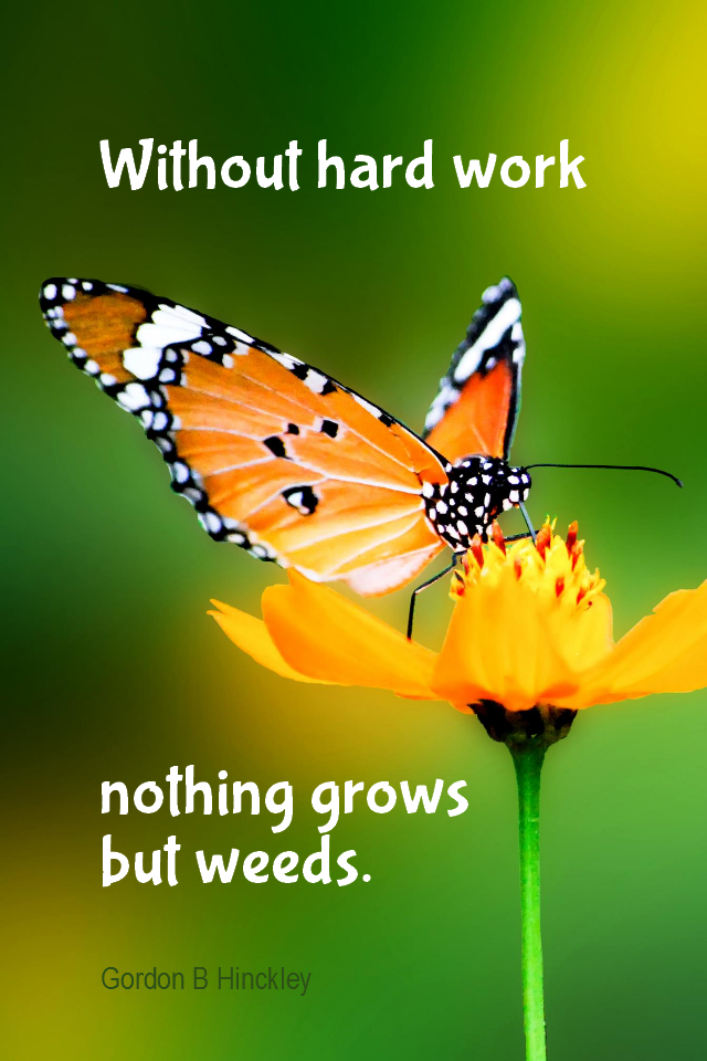 visual quote - image quotation for WORK - Without hard work nothing grows but weeds. - Gordon B Hinckley