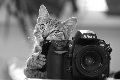 عناصر التصوير الفوتوغرافي 2
